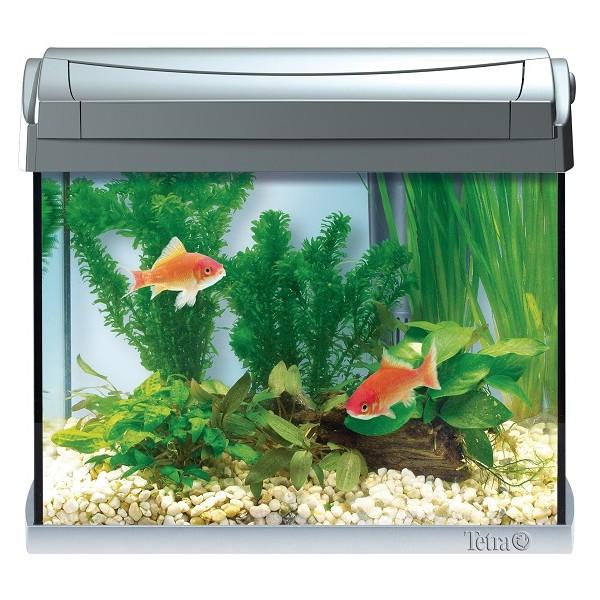 Aaquaray28 tetra aquarium aquaart 20 litres for Aquarium 20 litres